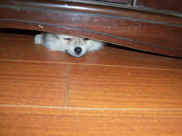 Playing Hide And Seek From My Brothers...