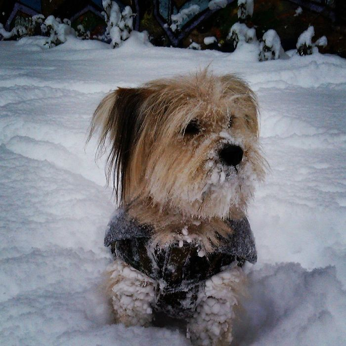 Medo's First Snow Adventure