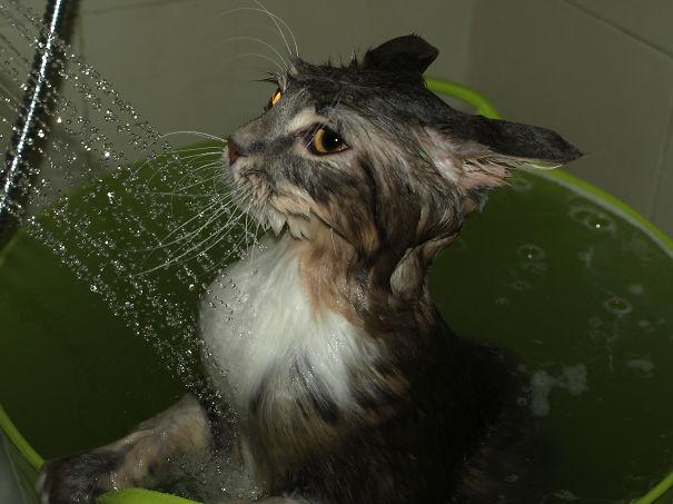 My Noah Likes Water Too...