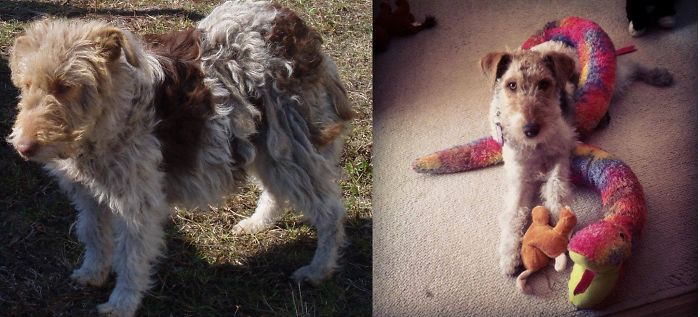 Me Beloved Zoya – Adopt! Change A Life!
