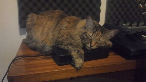 Hard Drive Cat, She's Got Back Up!