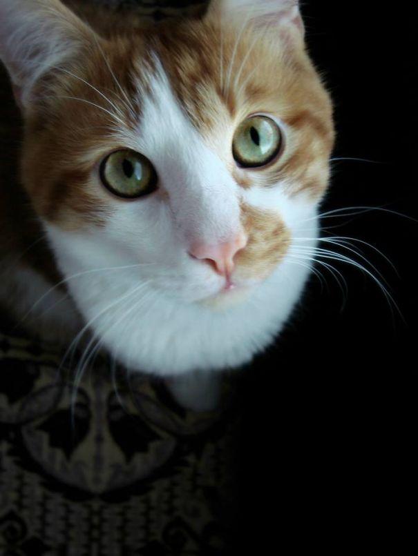 My Kitty Zayn:) Very Spoiled Indeed