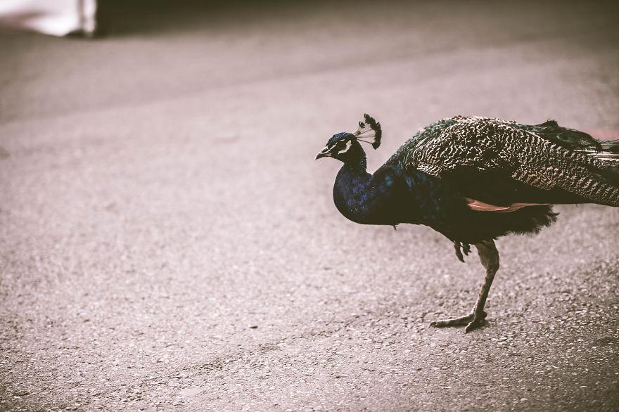My Photographs From The Calgary Zoo