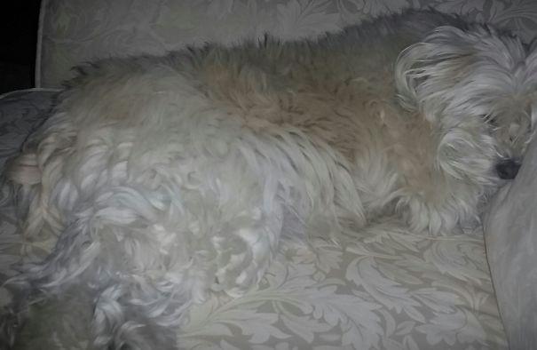 Where's Puppy?