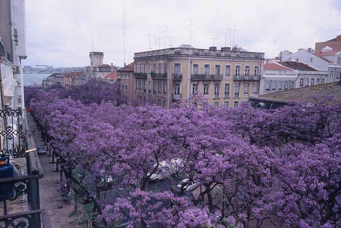 Avenue D. Carlos I, Lisbon, Portugal