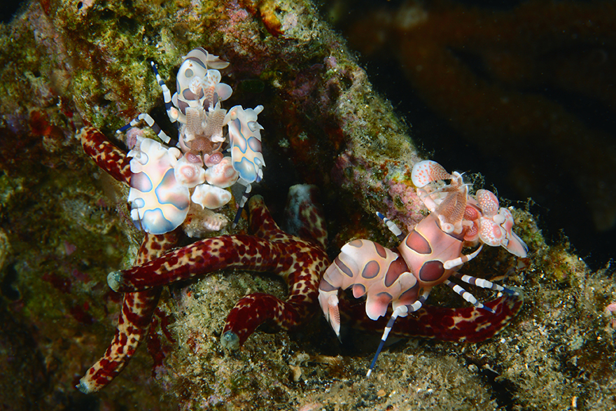 υποθαλάσσιες φωτογραφίες Ινδονησία θάλασσα