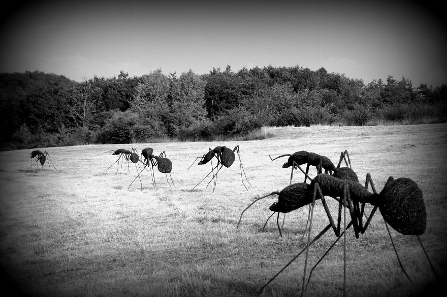 Iron Wire Ants By David Vanorbeek