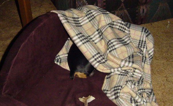 Snips N Snails N Puppy Dog Tails