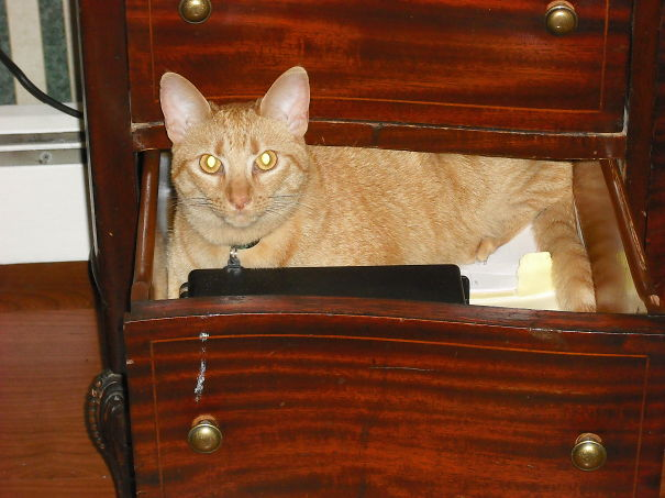 What Do You Mean You Have To Close The Drawer?