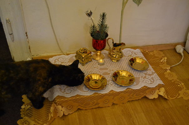 Christmas Dinner For Our Three Cats And One Dog :-)