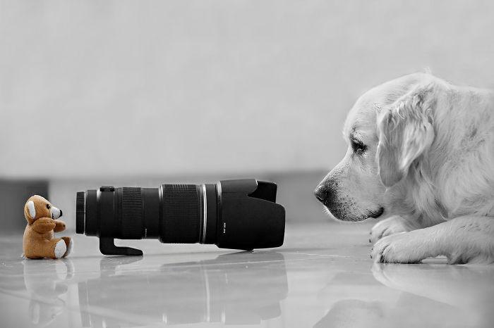 Quick! Take A Picture!