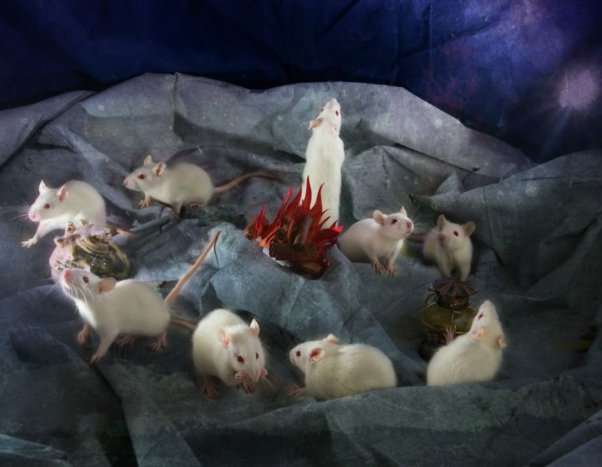 Animals Rescued From Labs Become Magic Models In Alice-In ...