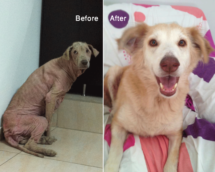 Hazel – Rescued By Animals Lebanon, She Was Severely Sick And Fearful – Complete Transformation