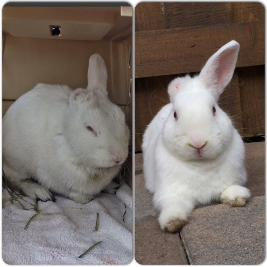 Blanco - The Day We Got Him From The Shelter....then After Lots Of Love!