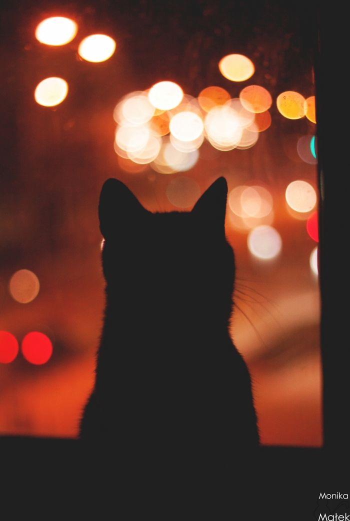 Cat In The Window.