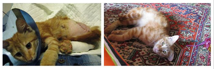 Mazdak(means Wise Little Guy In Persian)lost His Leg In A Car Accident In The Streets Of Tehran