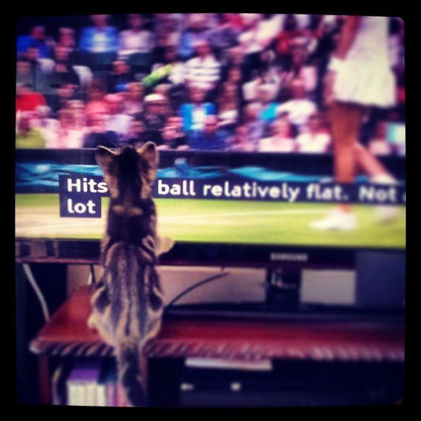 Sporty Kitten Watching Wimbledon