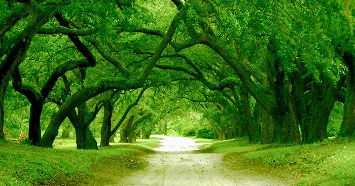 Orton Plantation Driveway (smithville Township Of Brunswick County, North Carolina, Usa)