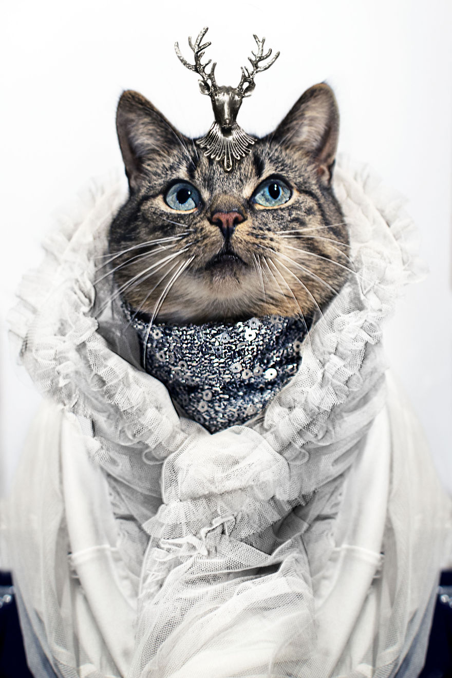 Photo Portraits Of House Cats