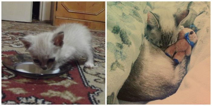 Didi, At 2 Weeks Old ( Found In A Bush )and Now,after 3 Years In My Home With Her Teddy Bear.