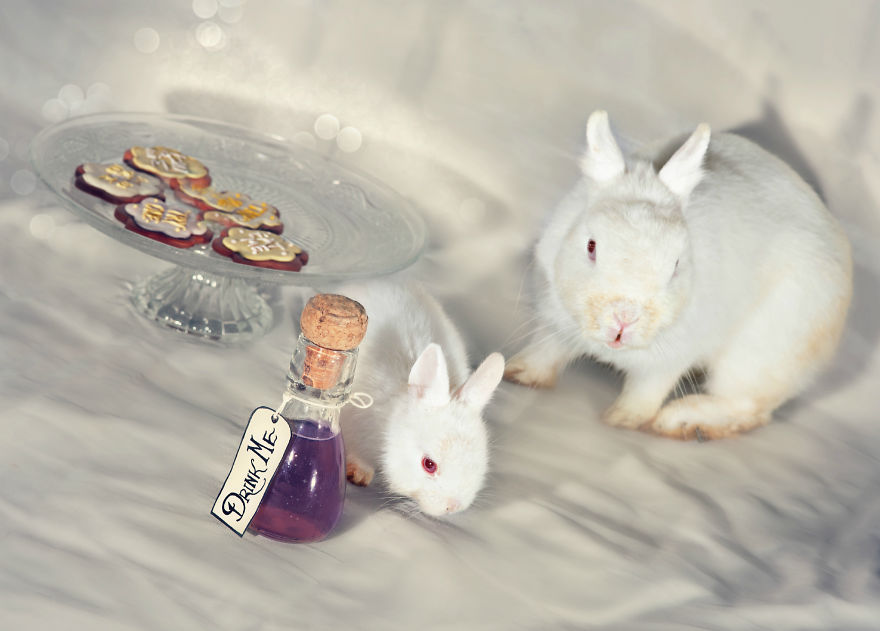 Animals Rescued From Labs Become Magic Models In Alice-In-Wonderland Photoshoot