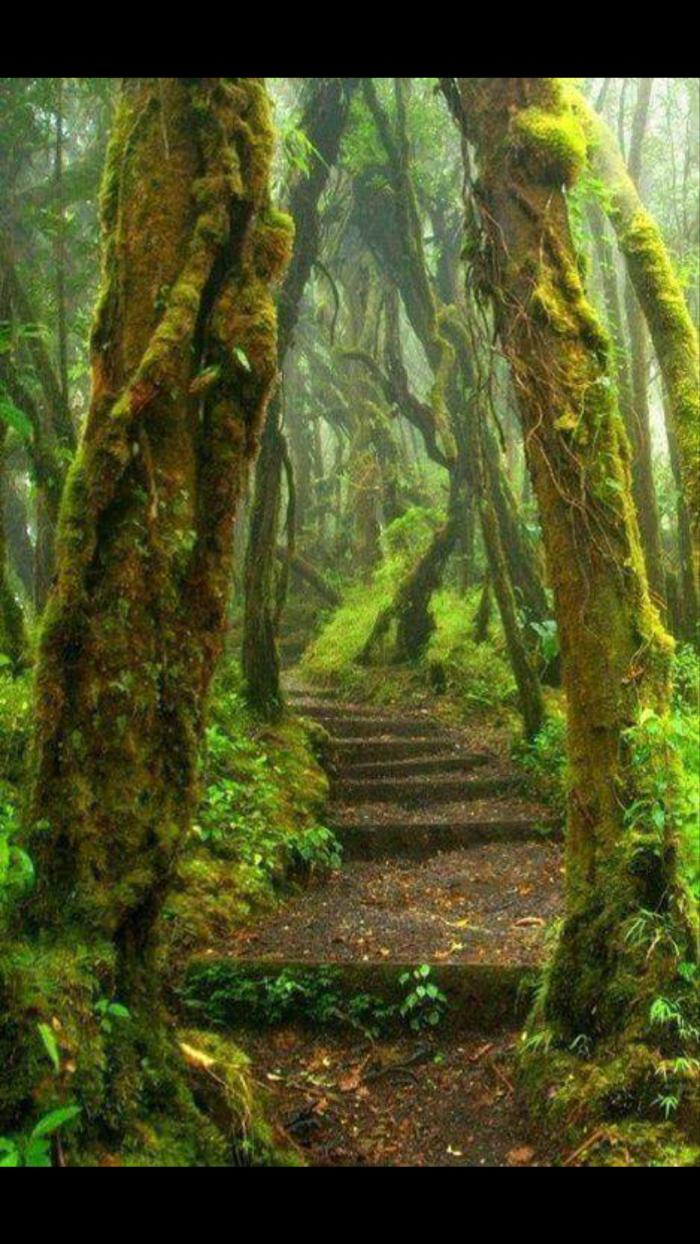 Parque Braulio Carrillo, Costa Rica