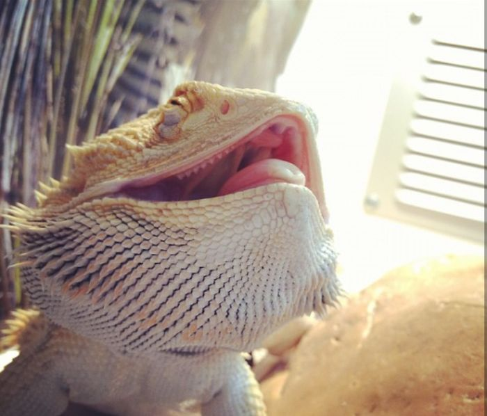 Laughing Dragon Finds Everything Funny