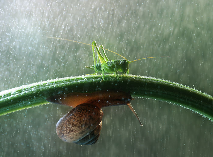 World Is A Fairy Tale: See The Magical Life Of Snails And Insects From Up-close