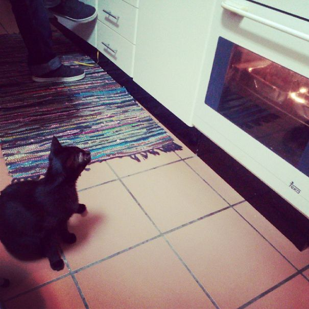 Xica The Cat Waiting For Her Meal, Roasted Turkey...