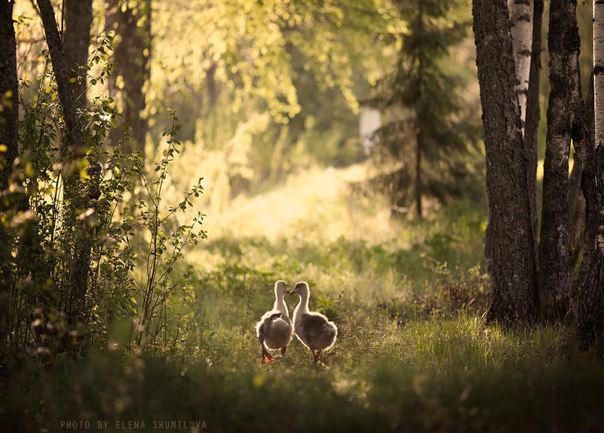 animales-niños-fotografía-elena-Shumilova-2-2
