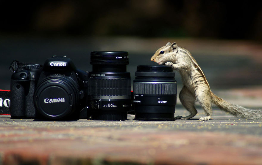 Squirrels Are Always Enthusiast About Everything