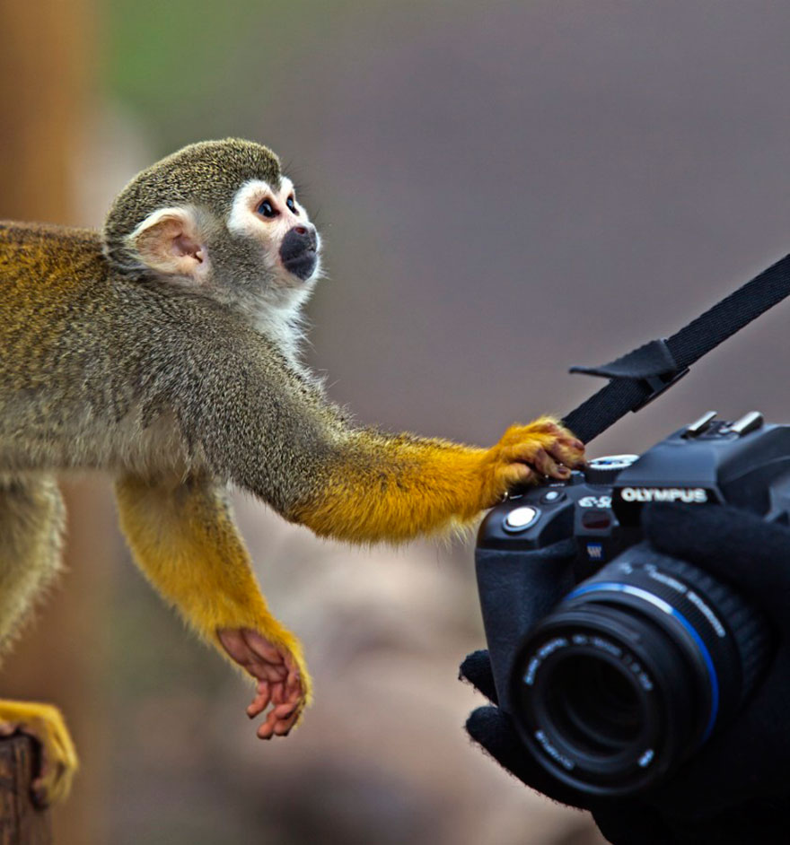 Excuse Me, Can I Have My Camera Back?