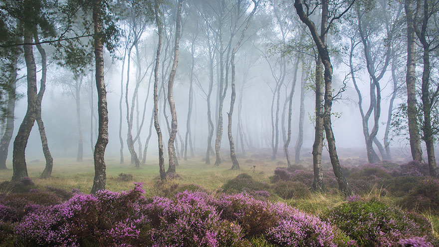 Stanton Moor, Peak District, Uk