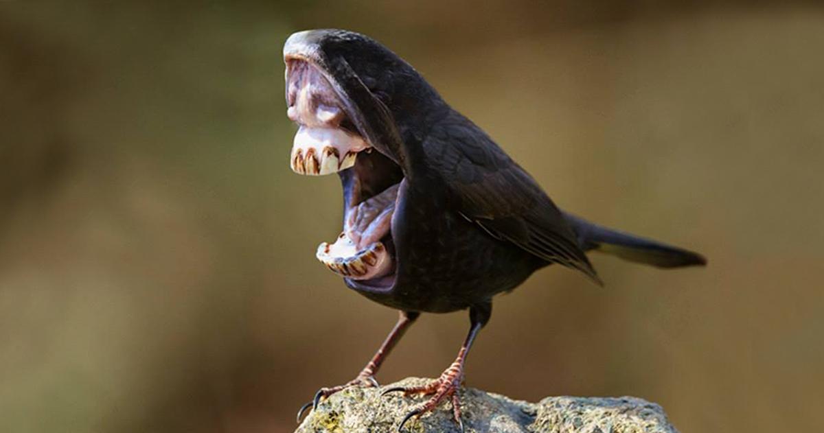 Big Mouth Birds: My Newest Series Of Hybrid Animals ...