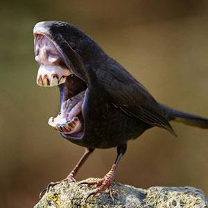 Big Mouth Birds: My Newest Series Of Hybrid Animals