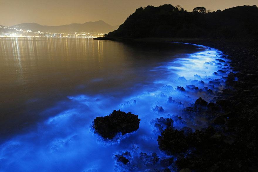 bioluminescence-hong-kong-noctiluca-scintillans-sea-sparkle-3