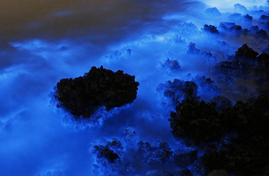 bioluminescence-hong-kong-noctiluca-scintillans-sea-sparkle-4