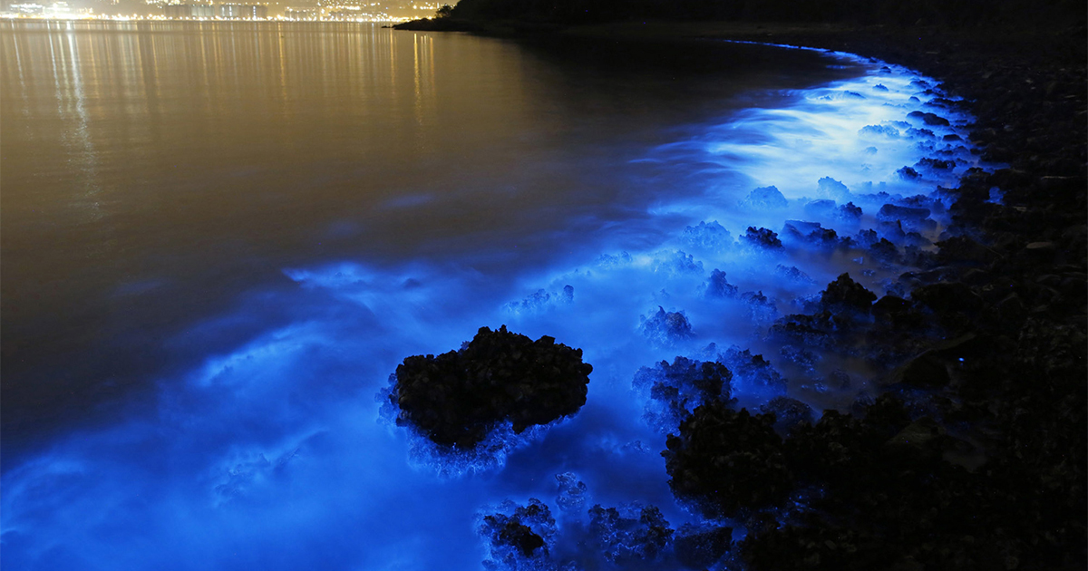 Bioluminescent Plankton Glow In Bloom On The Shores Of Hong Kong