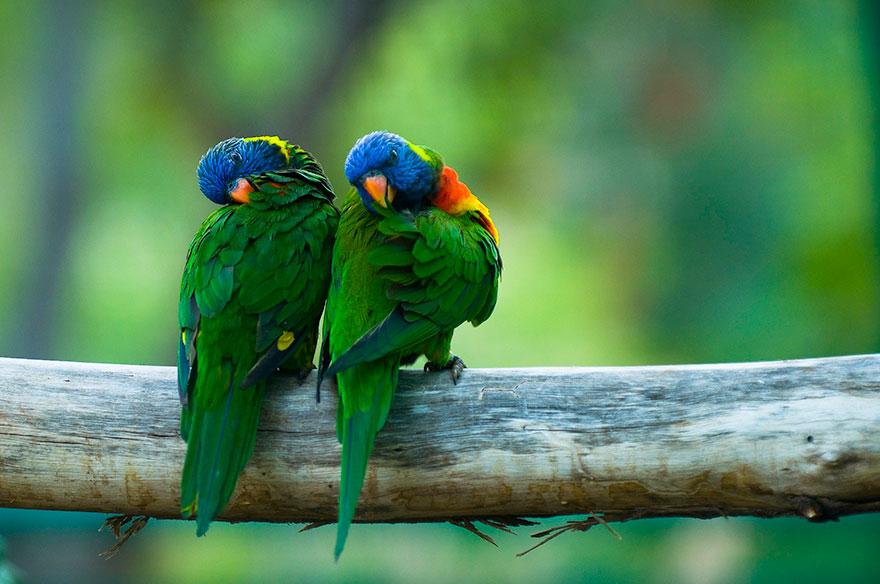 Colorful Parrot Couple