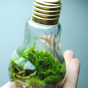 Little Ecosystem