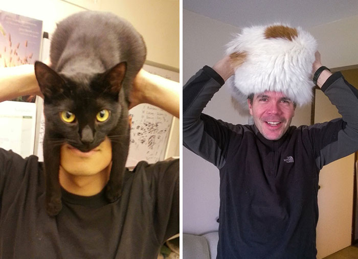 People Wearing Cats As Hats Is The Cutest Trend Right Now