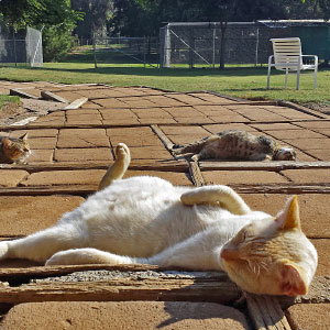 Every Week I Photograph Cats At The Largest No-kill Cat Sanctuary In California (700+ Cats)