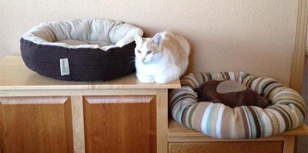 Finally Found A Comfy Spot