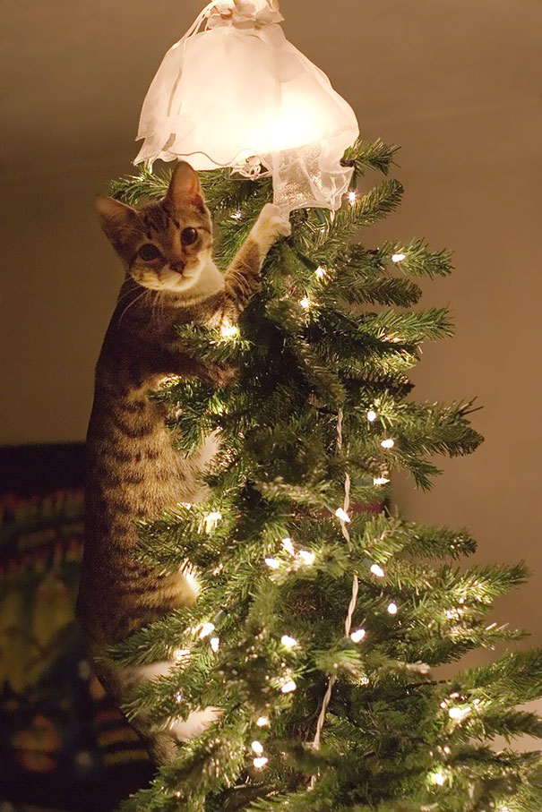 I'm The Prettiest Christmas Ornament You Have!