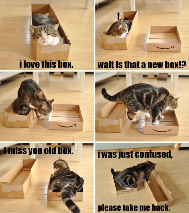 Just Cat Logic