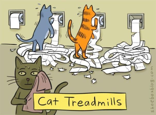 Treadmill For Cats