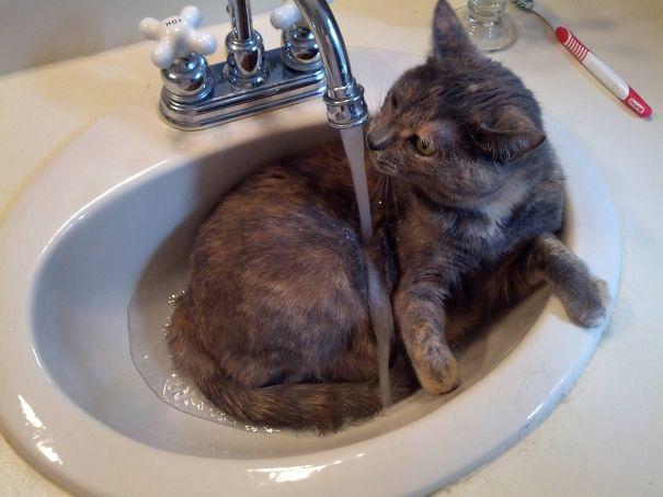 Cat Loves Water