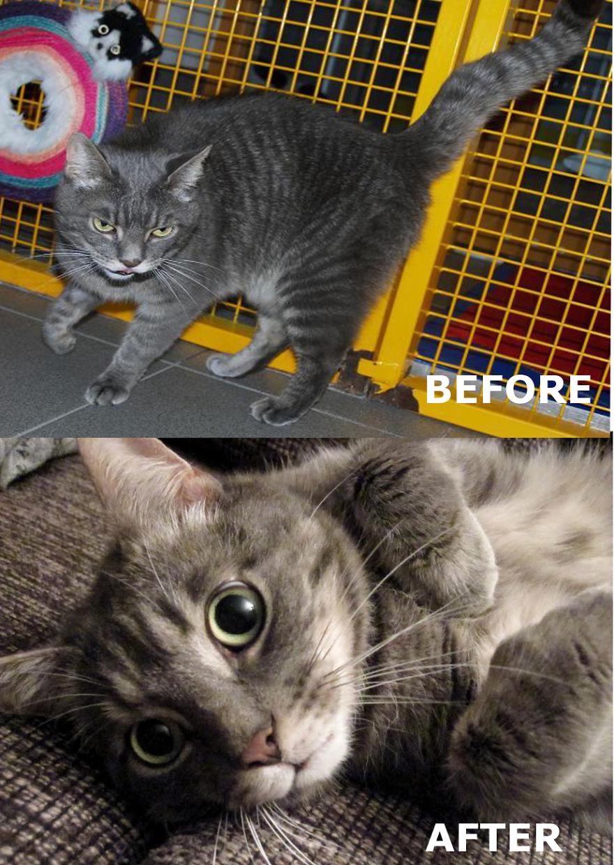 Uri - 4 Year Old Stray Cat