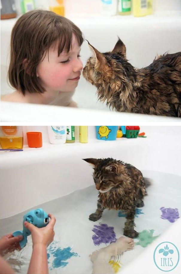 Cat Loves Water