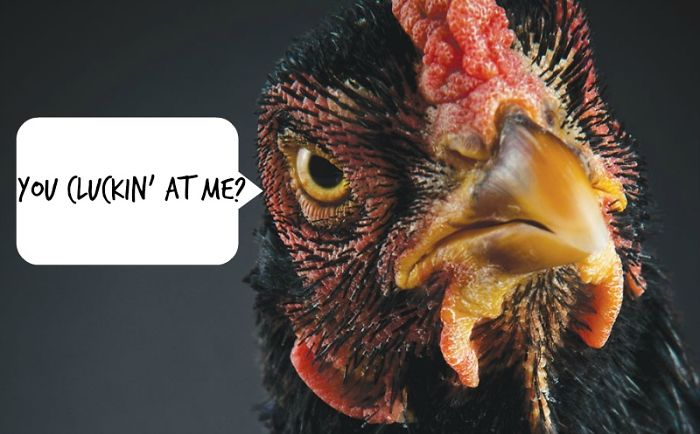 11 Reasons Chickens Do Not Like Nandos!